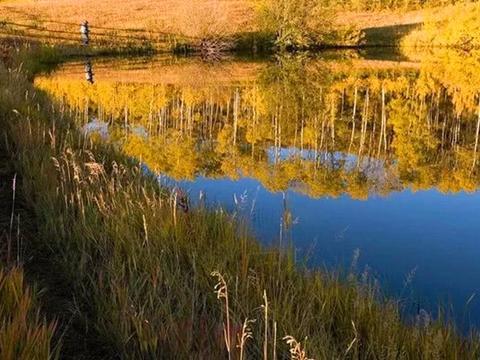 晚秋到初冬,大鲫鱼喜欢藏在这些地方,位置选对了,鱼获不用愁!