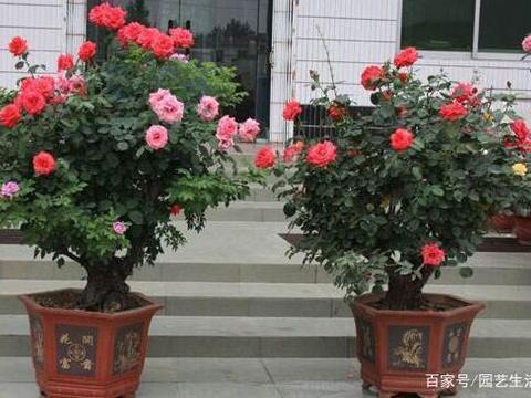 养花用错了花盆,养啥花都长不好,老园丁教你正确的选盆方法