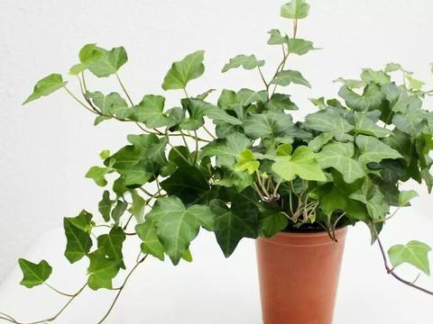 家里面的植物要想安全过冬,还得注意这几点!