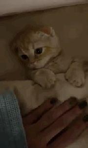 猫咪像个小婴儿,拍一拍摸一摸,就睡着了!