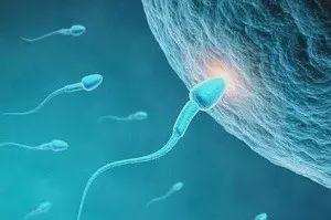 抓紧时间!研究发现精子活动能力最强的是秋冬季