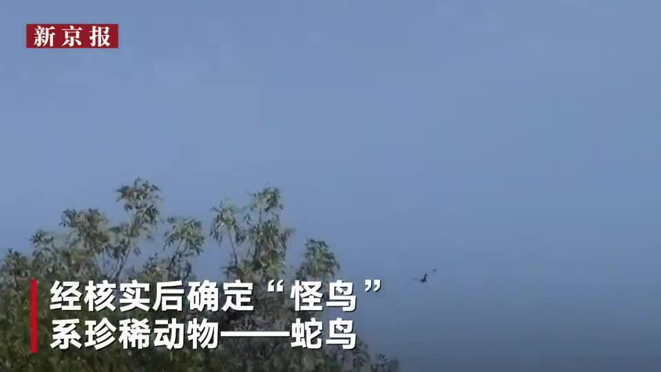 """国际丨越南惊现500只""""怪鸟""""原是濒临灭绝的珍稀动物"""