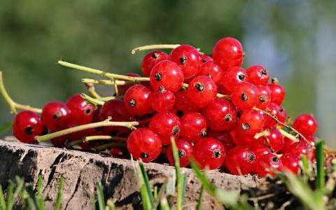 想长寿要先会吃,4种食物常吃,补充营养,延缓衰老,排毒养颜