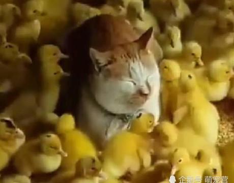 橘猫精力旺盛爱闹腾,主人找来一大群玩伴后,猫咪快被折磨疯了