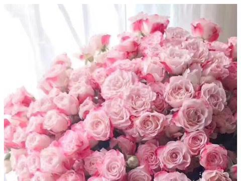 """喜欢菊花,不如养盆""""高档玫瑰""""多头玫瑰,花色粉嫩可爱,少女心"""