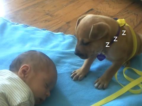"""小奶狗帮忙照顾宝宝,没想到却困到打瞌睡,被它""""暖哭""""了"""