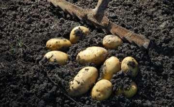 扶贫达人训练营卖农产品,学员望而却步,掌握这5点,就轻装上阵