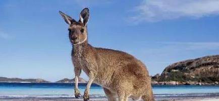 海外华人在澳洲买房须知道的十大原则!