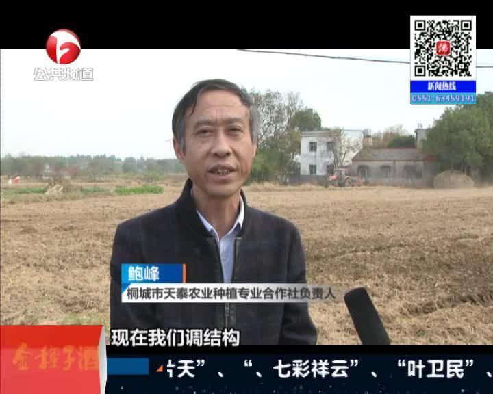 《新闻第一线》桐城:抗大旱调结构  增加抢播小麦4万亩