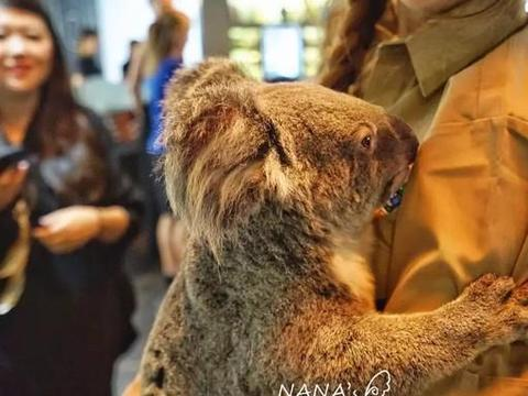 澳大利亚旅游必做项目之一,感受澳洲独有动物的魅力