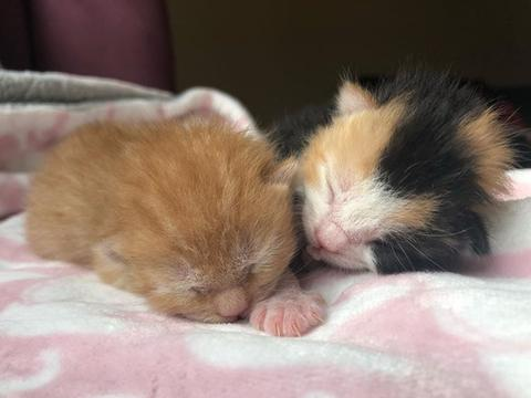 母猫初为人母,却对所生小猫区别对待,只因2只小猫晚生6小时