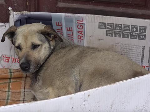 主人离世后,狗狗在门口等了7年,游客被它忠诚感动而收养了它