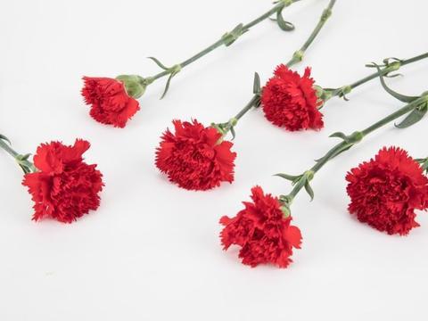 近段时间内,缘分与桃花心有灵犀,牵手唯美爱情的3大生肖!
