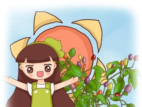 大叔在阳台种小辣椒,栽在花盆里,一个月结出五颜六色的果实