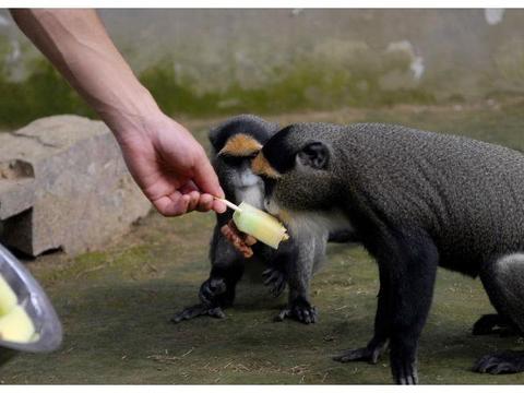 给野生动物喂食的坏处?反思对孩子的某些行为!