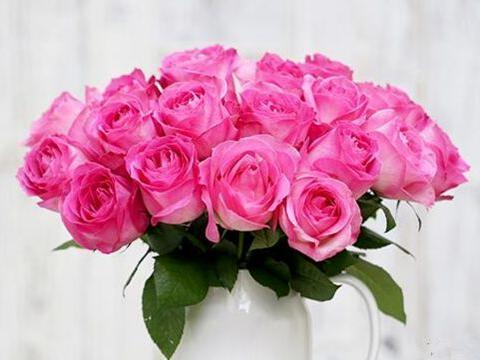 """喜欢玫瑰,就试试""""精品玫瑰""""糖果雪山,花开清新淡雅,色彩鲜艳"""