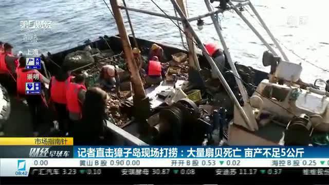 记者直击獐子岛现场打捞:大量扇贝死亡 亩产不足5公斤