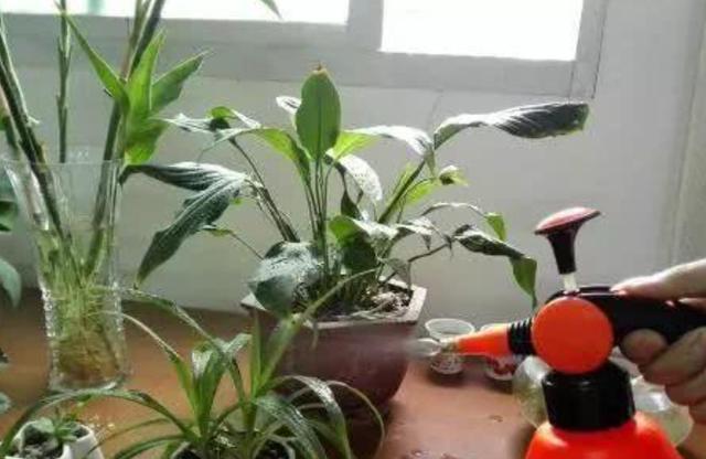 花盆里满是小黑飞,教你2招除虫,统统消灭,简单高效