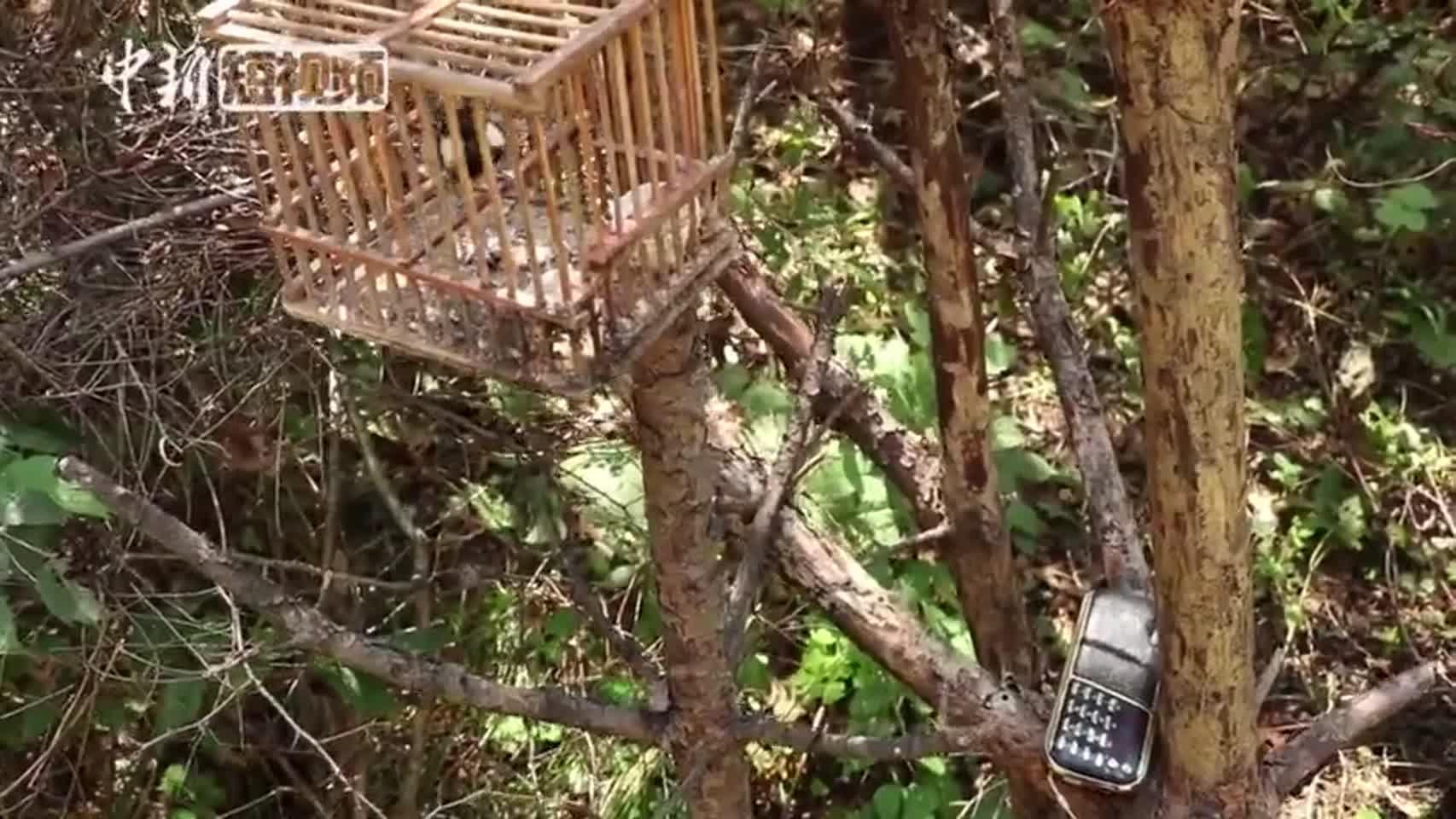 吉林森林公安破获特大非法狩猎案 还鸟类自由