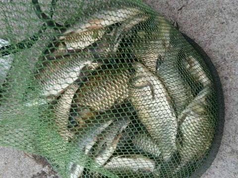 天冷了不该钓深水吗,守了3个小时都没鱼,钓草滩却连中大鲫鱼