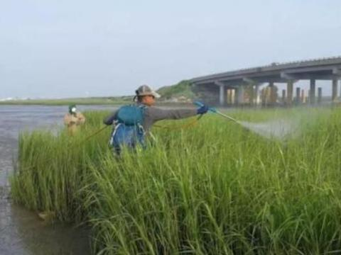 美国物种在中国泛滥,这次中国吃货也头疼了:实在没法下口