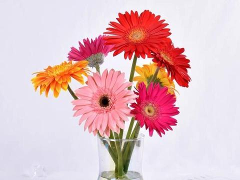 鲜花是深水养还是浅水养?