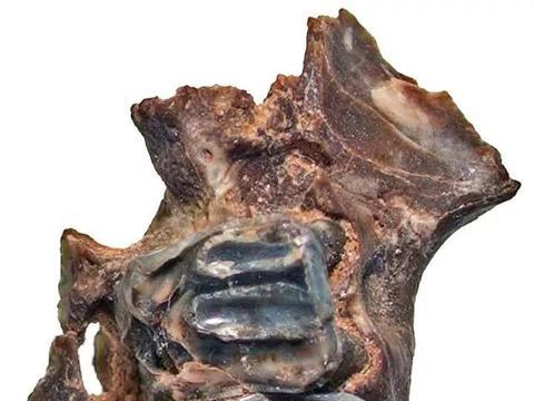 俄远东地区发现灭绝新物种!生活在3万年前,滑行距离超过50米