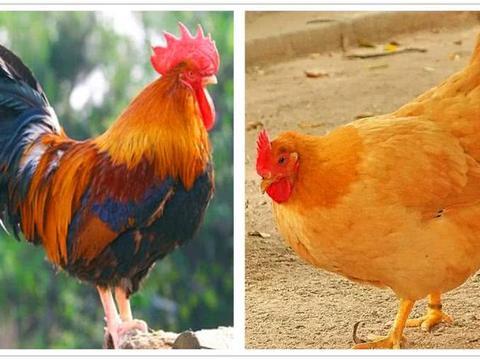 动物中普遍都是雄性比雌性漂亮,为什么在人类中都是女人更漂亮?