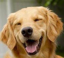 为奖励狗狗看家护院,主人赏它一块红烧肉
