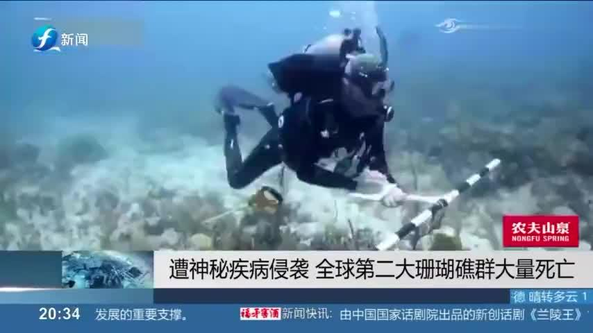 仅次于大堡礁的中美洲珊瑚礁,遭神秘疾病侵袭,出现大量死亡现象