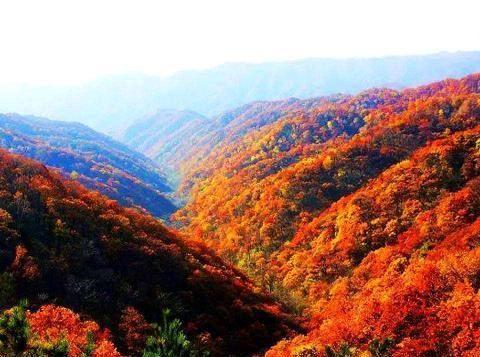 此香山非彼香山 陕西韩城这座香山同样秋色渲染美如画