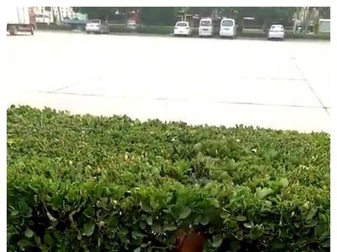 金毛钻进绿化带,从里面叼出一件东西,主人看清后简直笑到扶墙走