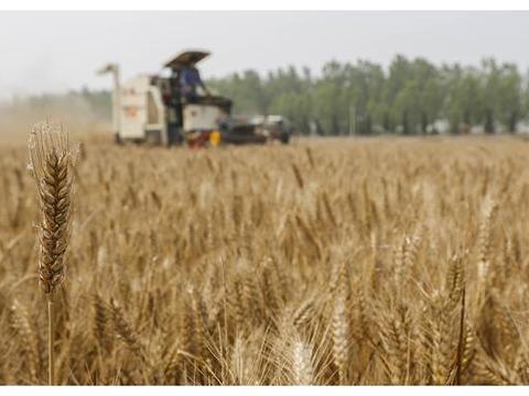 敢于打破北方传统小麦玉米轮作种植制度,提高农业生产效益