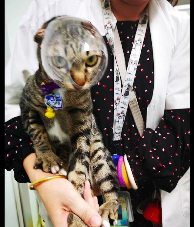 主人给猫咪剪指甲时,为防止被咬伤做了个神器,猫:感觉被侮辱了