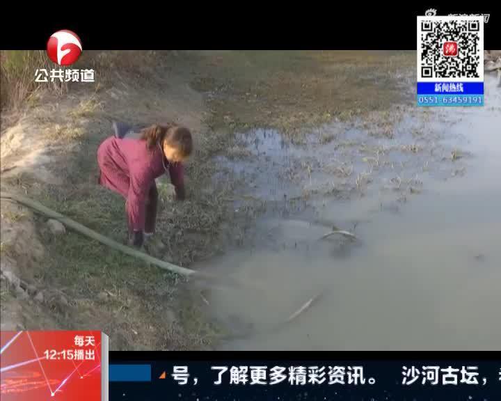 《新闻午班车》肥西:节水滴灌  抗旱保苗