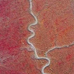 大连这片红海滩上了人民网