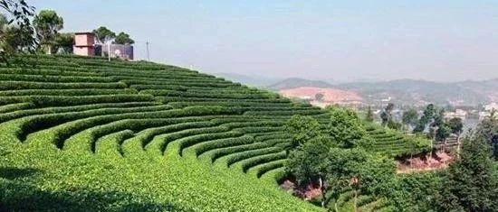 全力抢占绿色食品产业发展制高点,打造世界一流品牌
