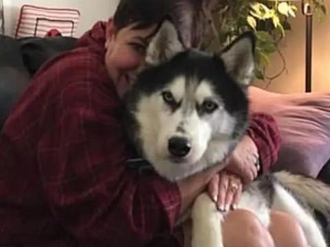 宠物狗嗅出主人身上有异常,一检查竟然发现了癌症