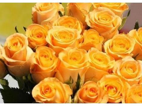 """家里养花,不如养盆""""精品玫瑰"""",花姿卓越,艳压群芳!"""
