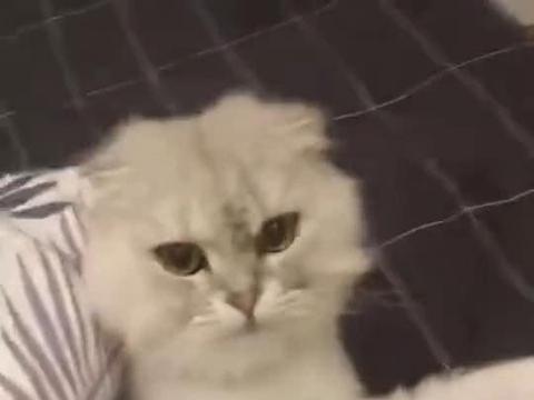 男子回家发现家里都是水,猫一脸难过坐在床上,喵:我不是故意的