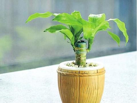 用坏掉的水果来养花,绝对天然的好肥料!