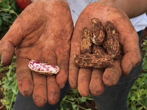 """被誉为""""长生果"""",亩产值近万元,市场供不应求,种植的人却不多"""