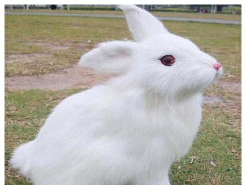 心理学: 下面哪只兔子最好看? 测你的小孩将来多有出息!