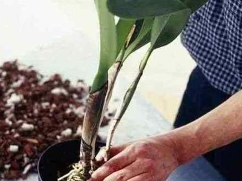喜欢养花,但不会区分土壤的性质,不妨来学两手