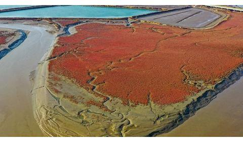 太意外啦!人民网发布庄河红海滩航拍……