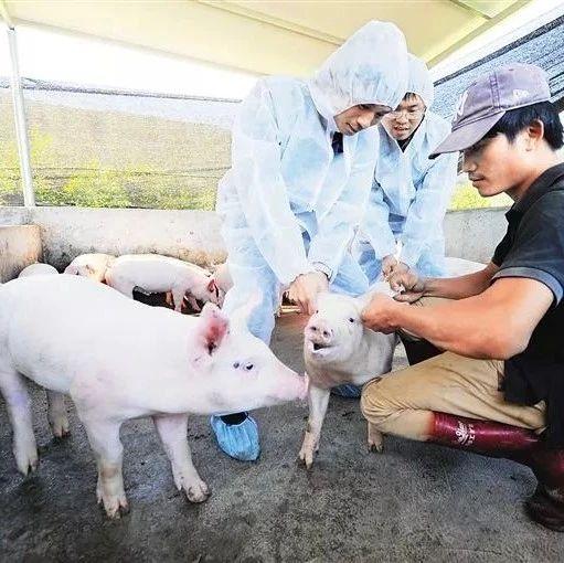 农业农村部:非洲猪瘟疫苗都是假的,见到就举报!