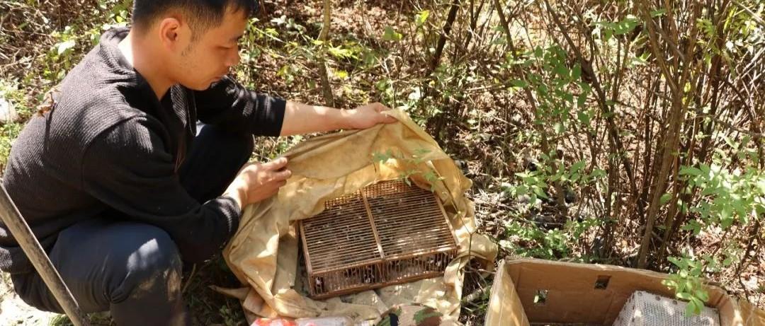 厉害了!通化市森林公安局成功破获一起特大非法狩猎案!