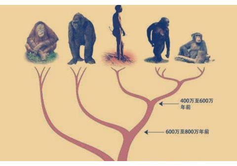 人类染色体是否被外星人动过手脚,现代人比600万年前少了一对