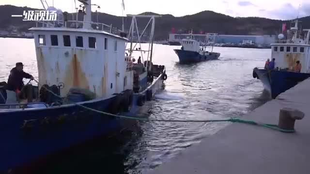 实拍獐子岛渔港码头:死亡扇贝壳堆积如山