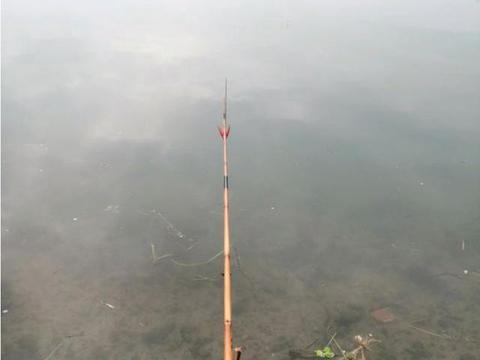 """彩色鱼被村民嫌弃无人吃,""""塞满""""乡下河道,就要成灾了"""